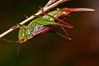 nature, animal, insect