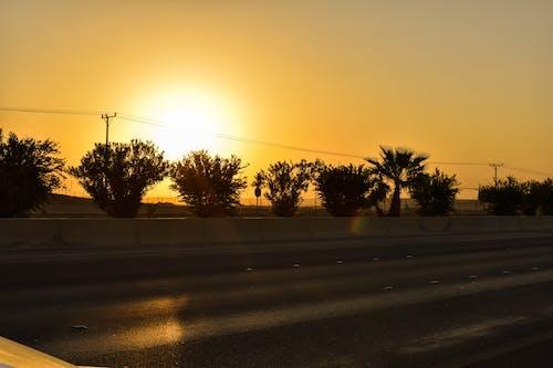 Free stock photo of golden hour, orange, sun