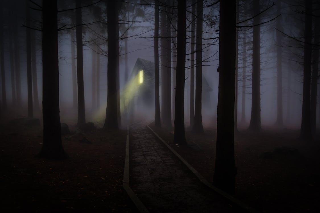 Свет в окне здания в темном лесу