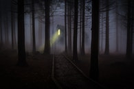night, forest, trees
