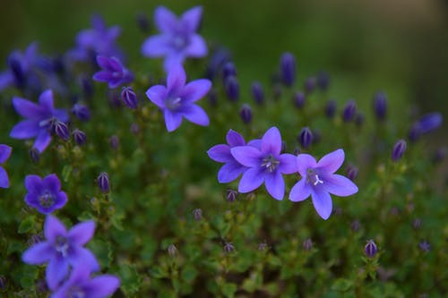 Free stock photo of flowers, garden, little flowers, nature