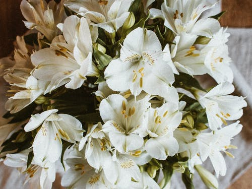 From above of elegant bouquet of Peruvian lily flowers with white delicate petals in daylight