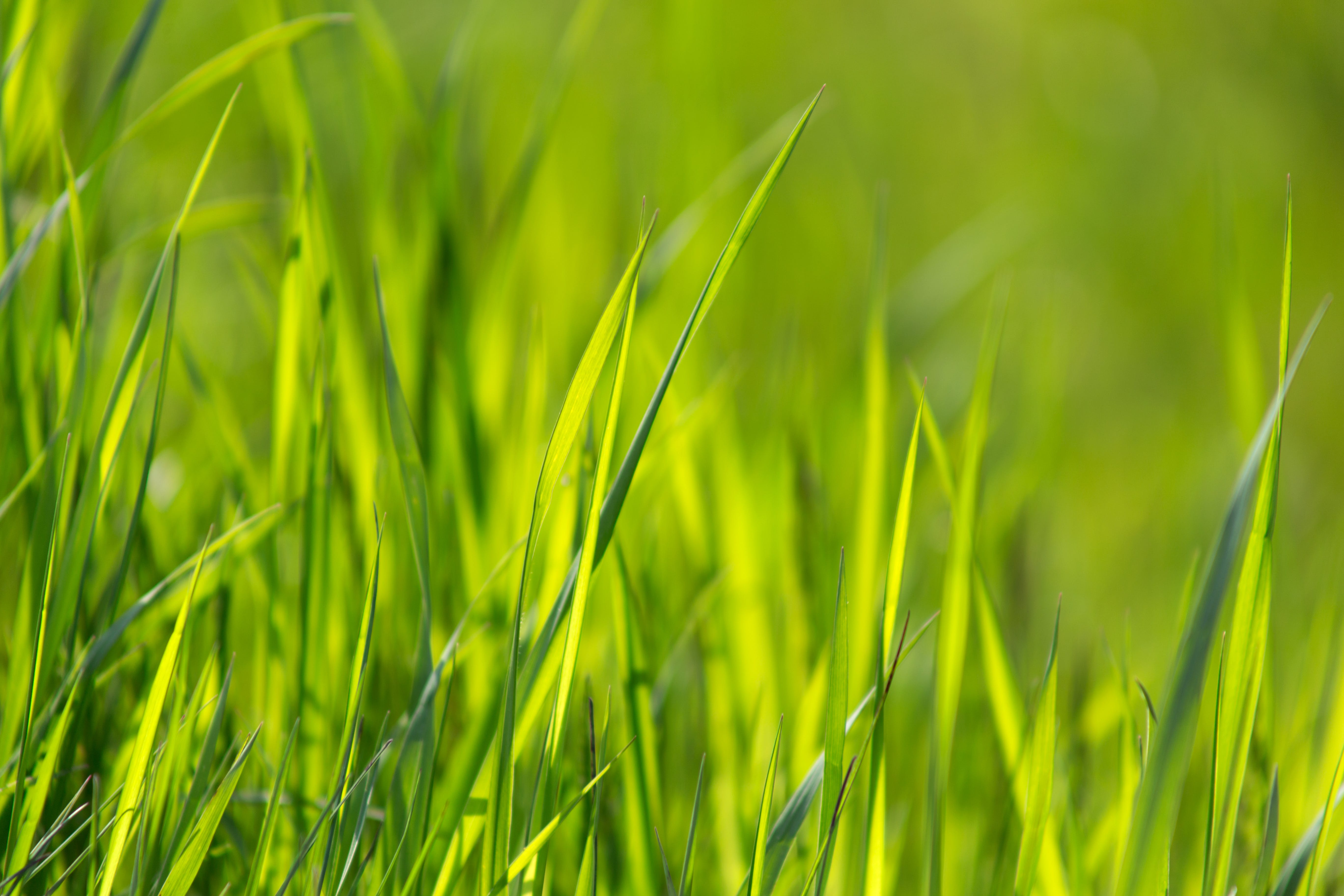 ぼかし, フィールド, ヘイフィールド, 成長の無料の写真素材