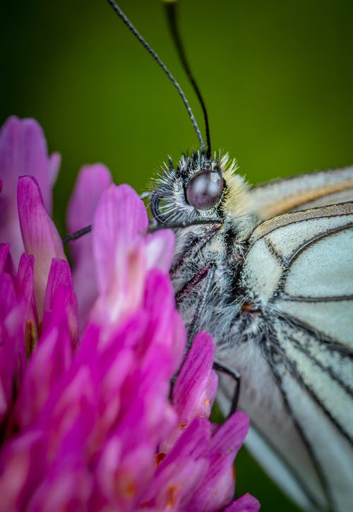 Free stock photo of butterfly, flower, macro