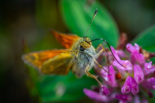 Gratis lagerfoto af blomst, makro, sommerfugl