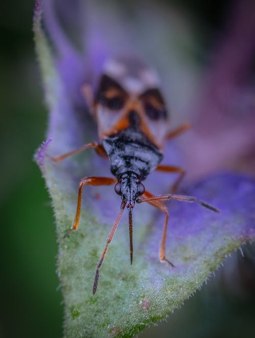 Free stock photo of bug, macro