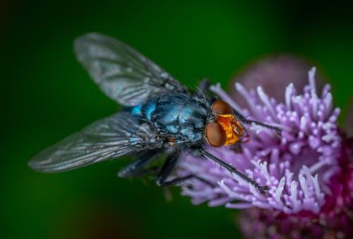 Free stock photo of flower, fly, macro