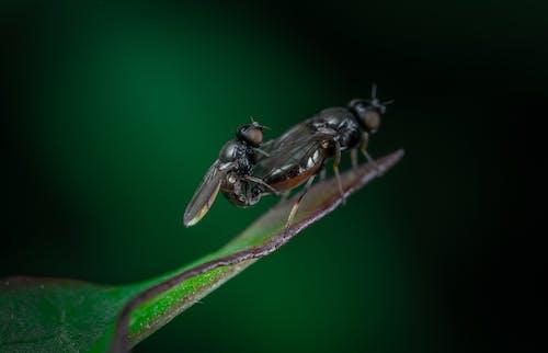Gratis lagerfoto af flue, flyve, flyvning, makro