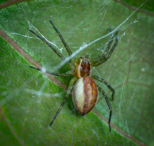 Gratis lagerfoto af edderkop, makro, spindler