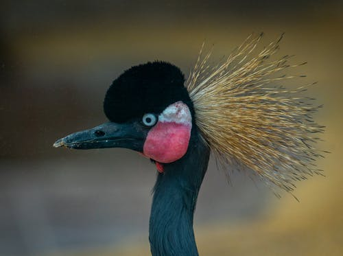 Black and Yellow Bird With Red Beak