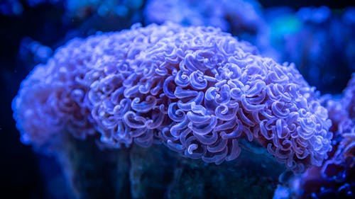 White and Blue Coral Reef