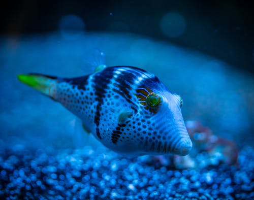 White and Blue Fish in Water