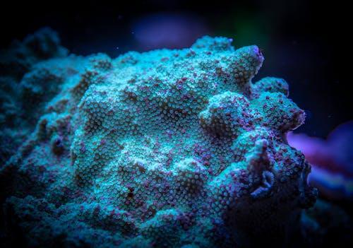 Gratis lagerfoto af koral, polyp, undervands