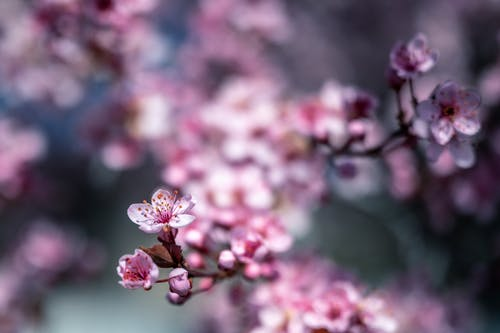 Colorful blossoming tree with small pink flowers with gentle petals growing in park in daytime
