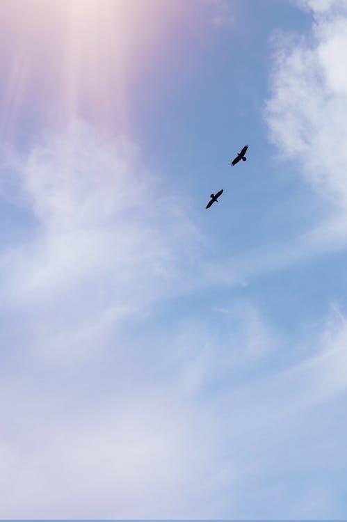 Predatory birds flying in cloudy shiny sky