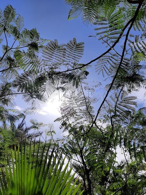 Free stock photo of beautiful sky, Between trees., trees