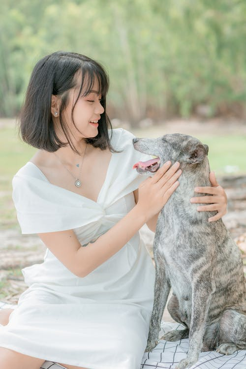 Glad Asian woman caressing purebred dog in park