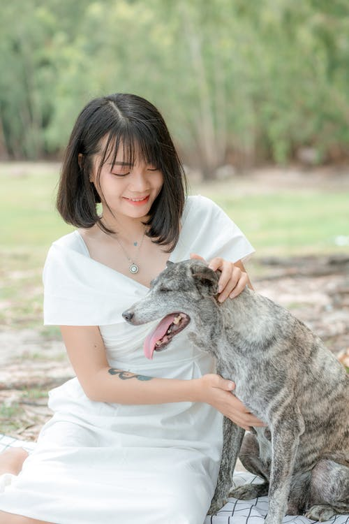 Cheerful Asian lady stroking adorable dog in park