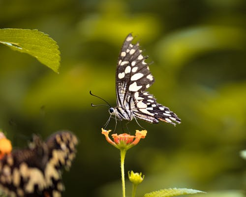 Black and White Butterfly Perched on Green Plant