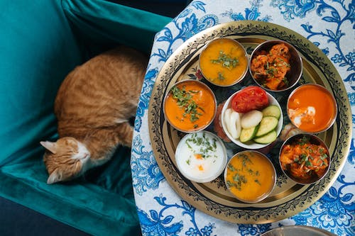Free stock photo of cat, cats, domestic cats, indian food