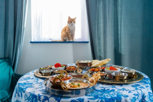 Free stock photo of cat, domestic cat, indian food