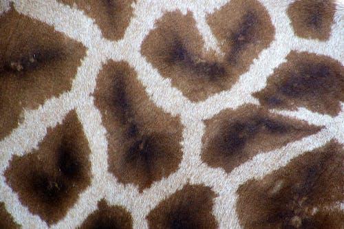 Gratis stockfoto met giraffe, motief, patroon, structuur