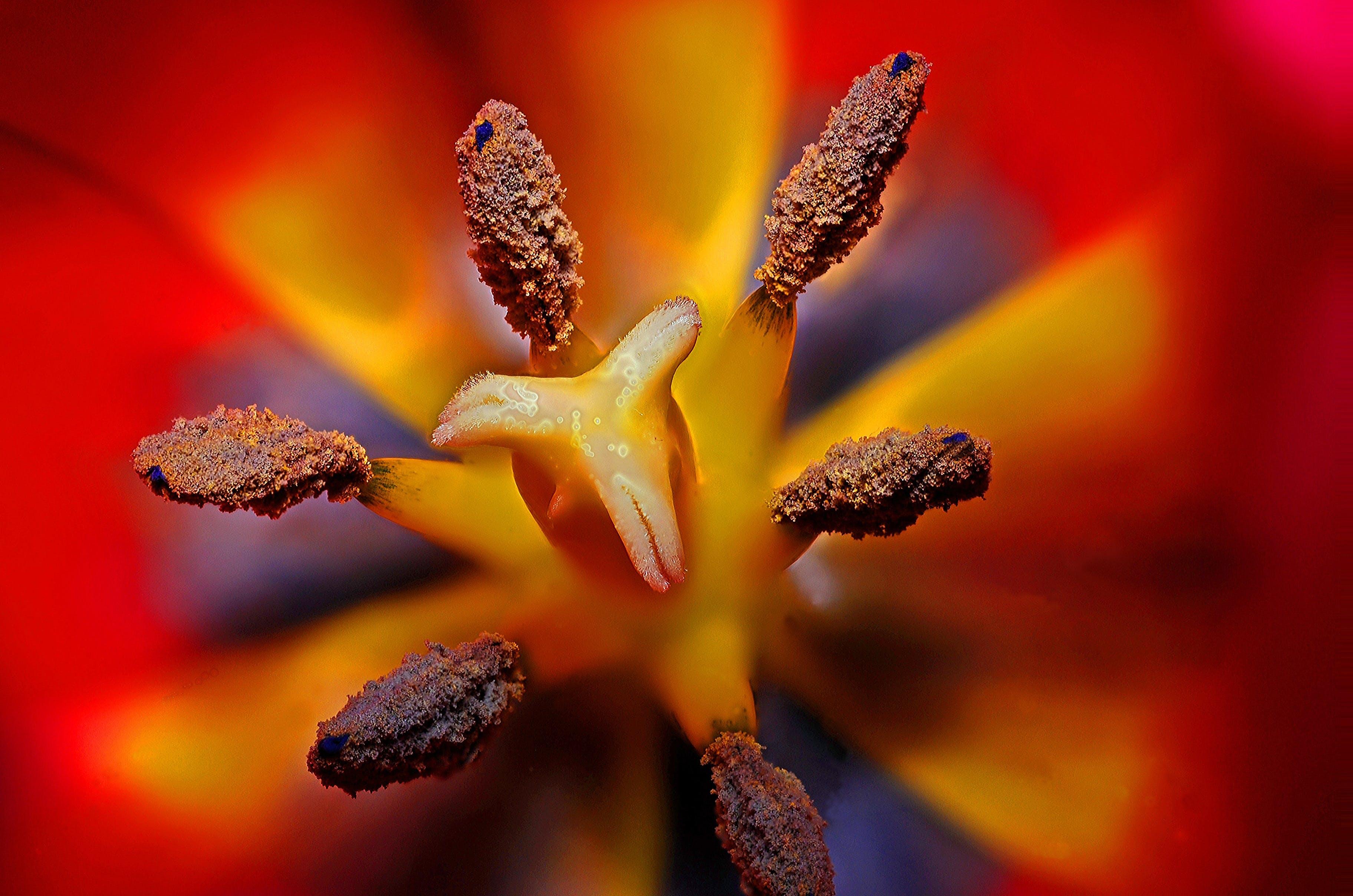 Black Yellow and Red Flower Stigma in Tilt Shift Lens