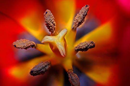 Ảnh lưu trữ miễn phí về cận cảnh, hệ thực vật, hoa, nhị hoa