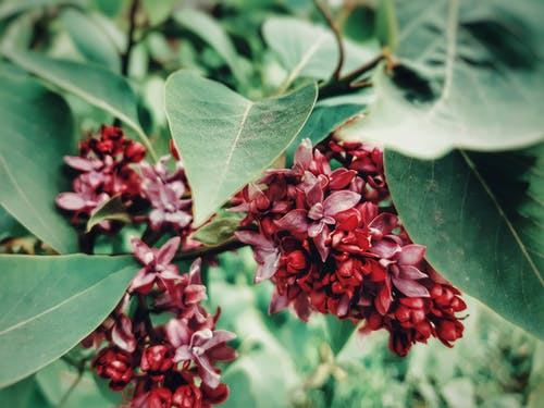 Bright blooming red flowers with pointed leaves