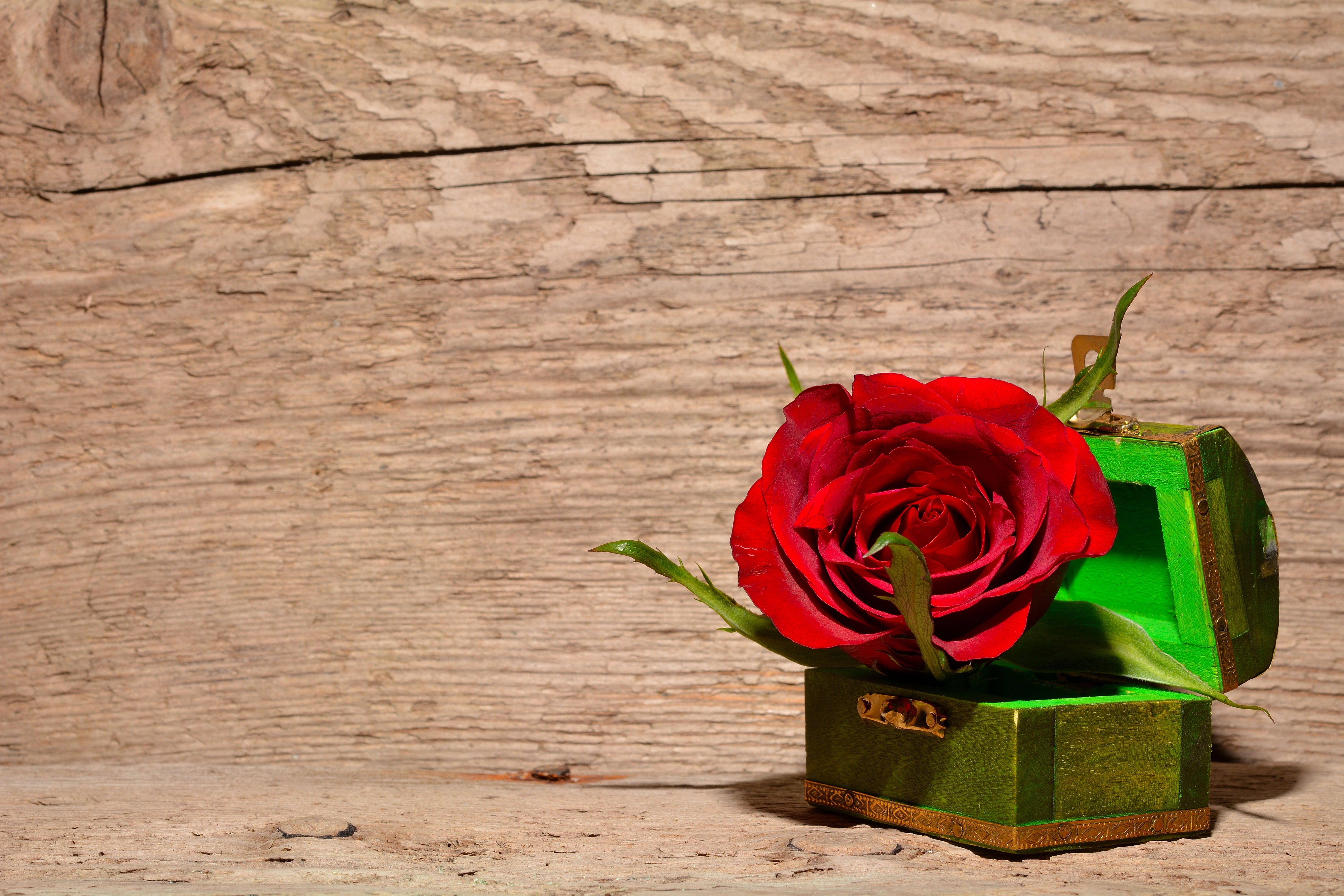 Red and Green Rose Inside Green and Brown Chest Box