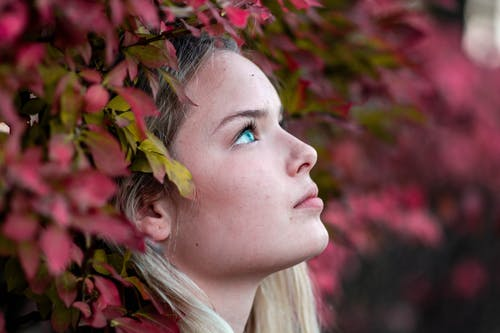 Free stock photo of beautiful flowerflower, blue eye, eye, portrait