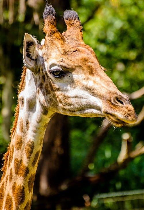 Ảnh lưu trữ miễn phí về Châu phi, con vật, động vật có vú, động vật hoang dã