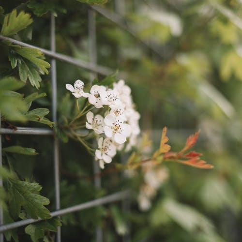 Shrub leaves with blossoming flower behind fence in summer