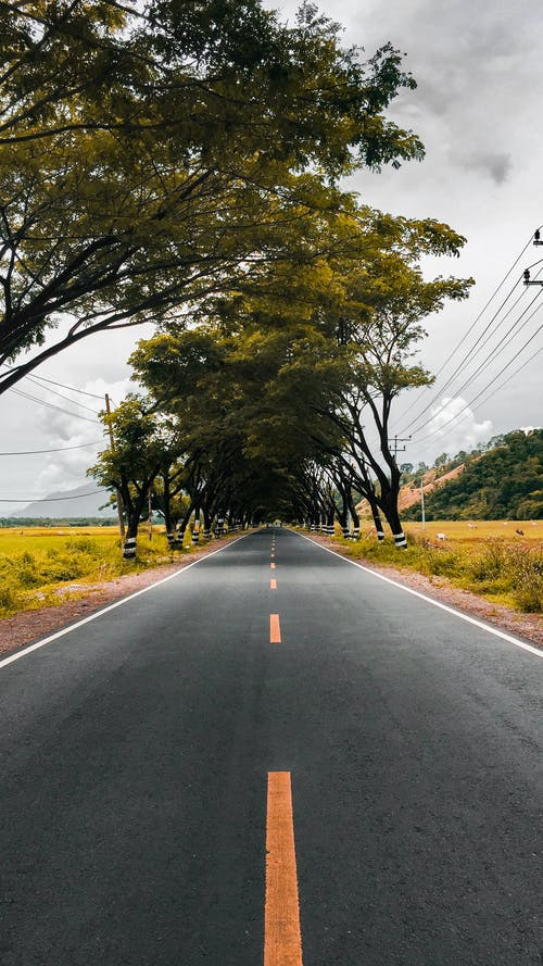 Empty straight asphalt roadway with yellow marking lines near bright field with growing trees under gloomy sky in daylight in countryside