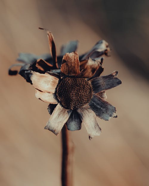 Free stock photo of brown, dead, dry