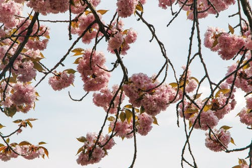 Free stock photo of spring flower