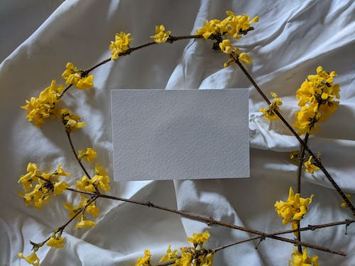Free stock photo of blank card, card, floral, spring