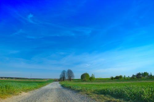 Free stock photo of błękitne niebo, droga, drzewa