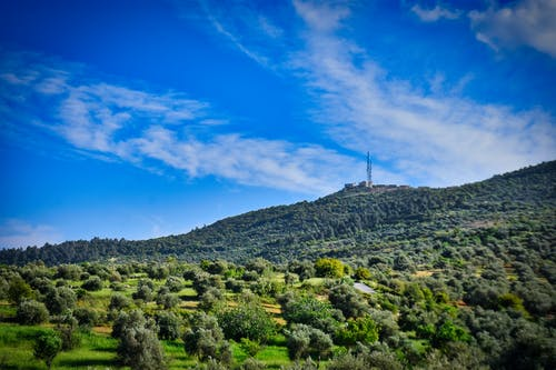 Free stock photo of forest, jerash, jordan, landscape