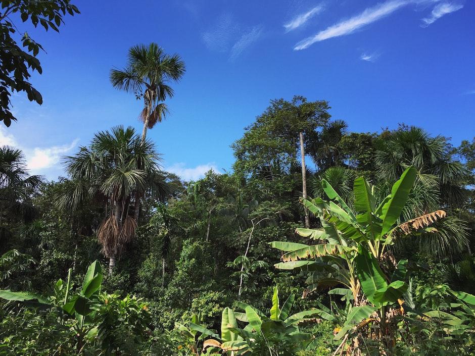 Amazon Rain Forest, Amazonian Jungle, jungle