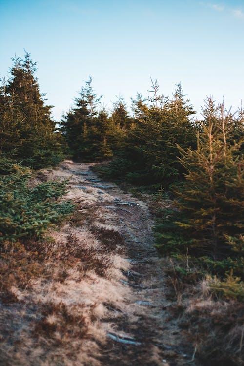 Rough walkway between trees on hillside under blue sky