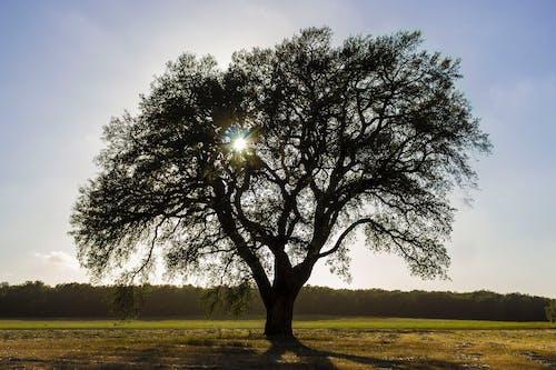 คลังภาพถ่ายฟรี ของ ดวงอาทิตย์, ต้นไม้, ตะวันลับฟ้า