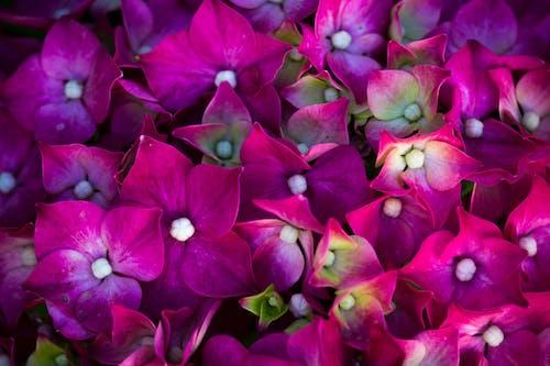 คลังภาพถ่ายฟรี ของ pinh, ขาว, ดอกไม้