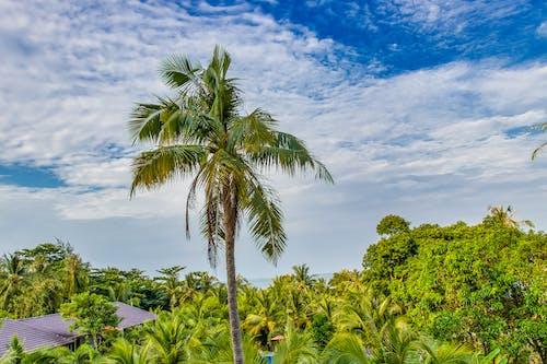 Foto stok gratis awan, eksotik, eksotis, firdaus