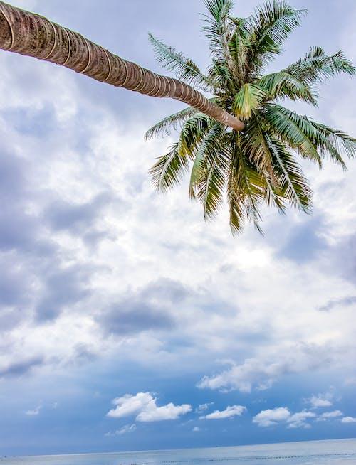 Foto stok gratis awan, gila, langit, mega