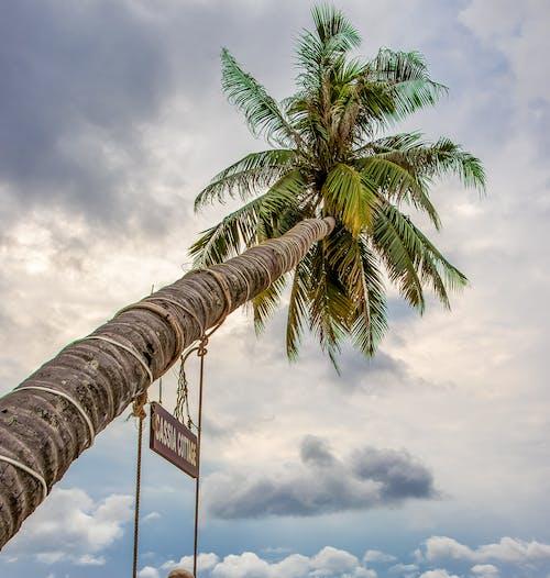 哇, 天空, 富国, 旅行 的 免费素材照片