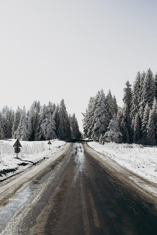 Road running near snowy terrain in winter day