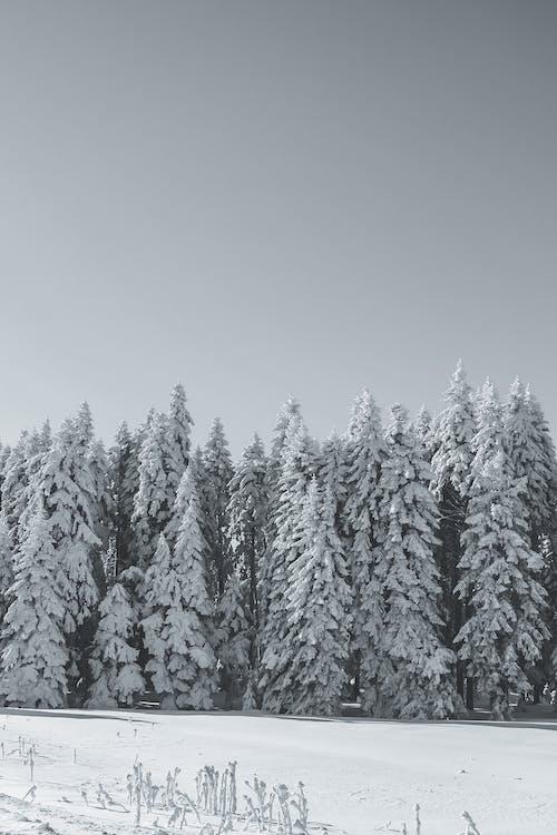 Forest on snowy terrain in winter day