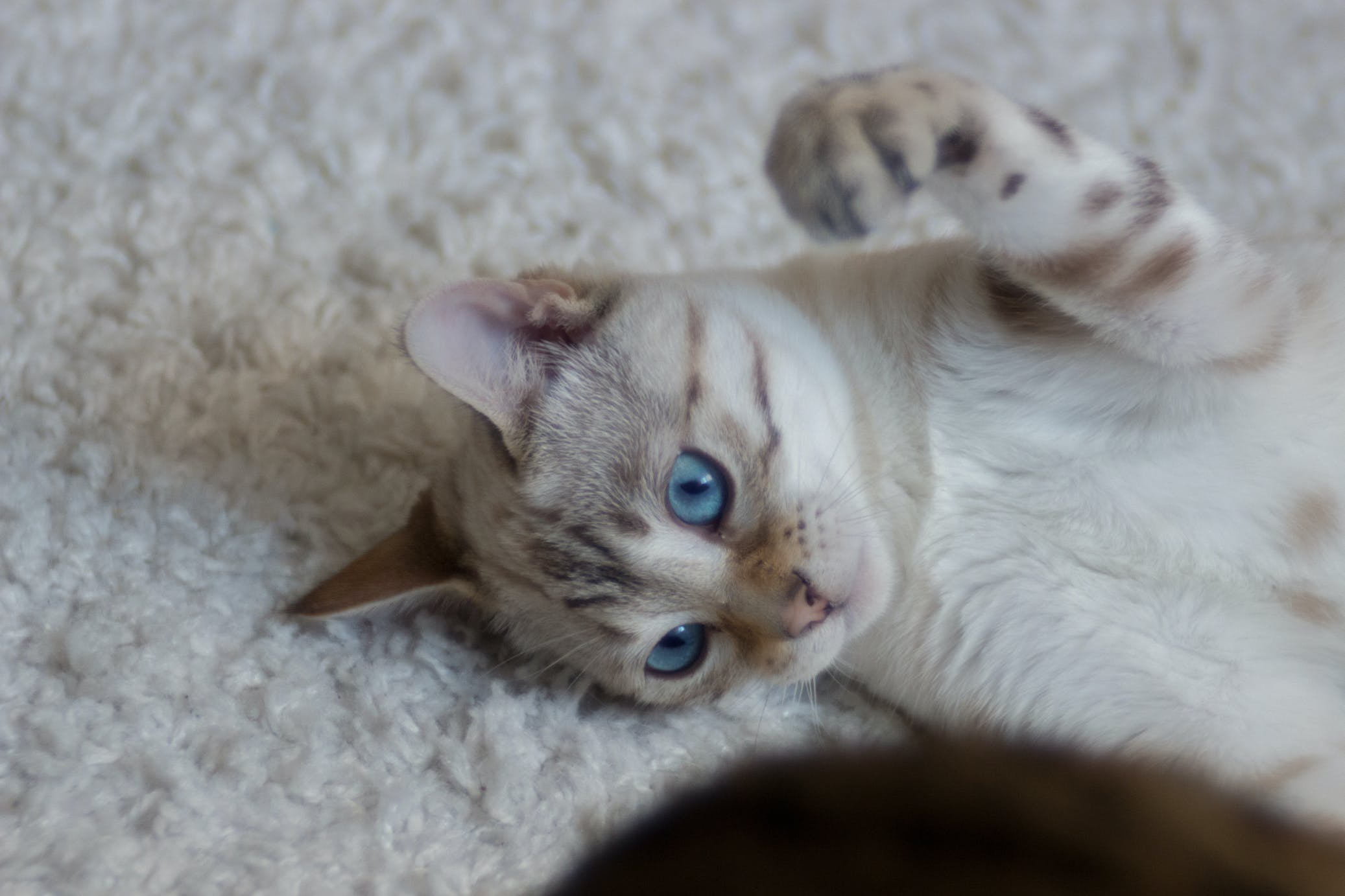 Free stock photo of cat, cat eyes, cat face, cats