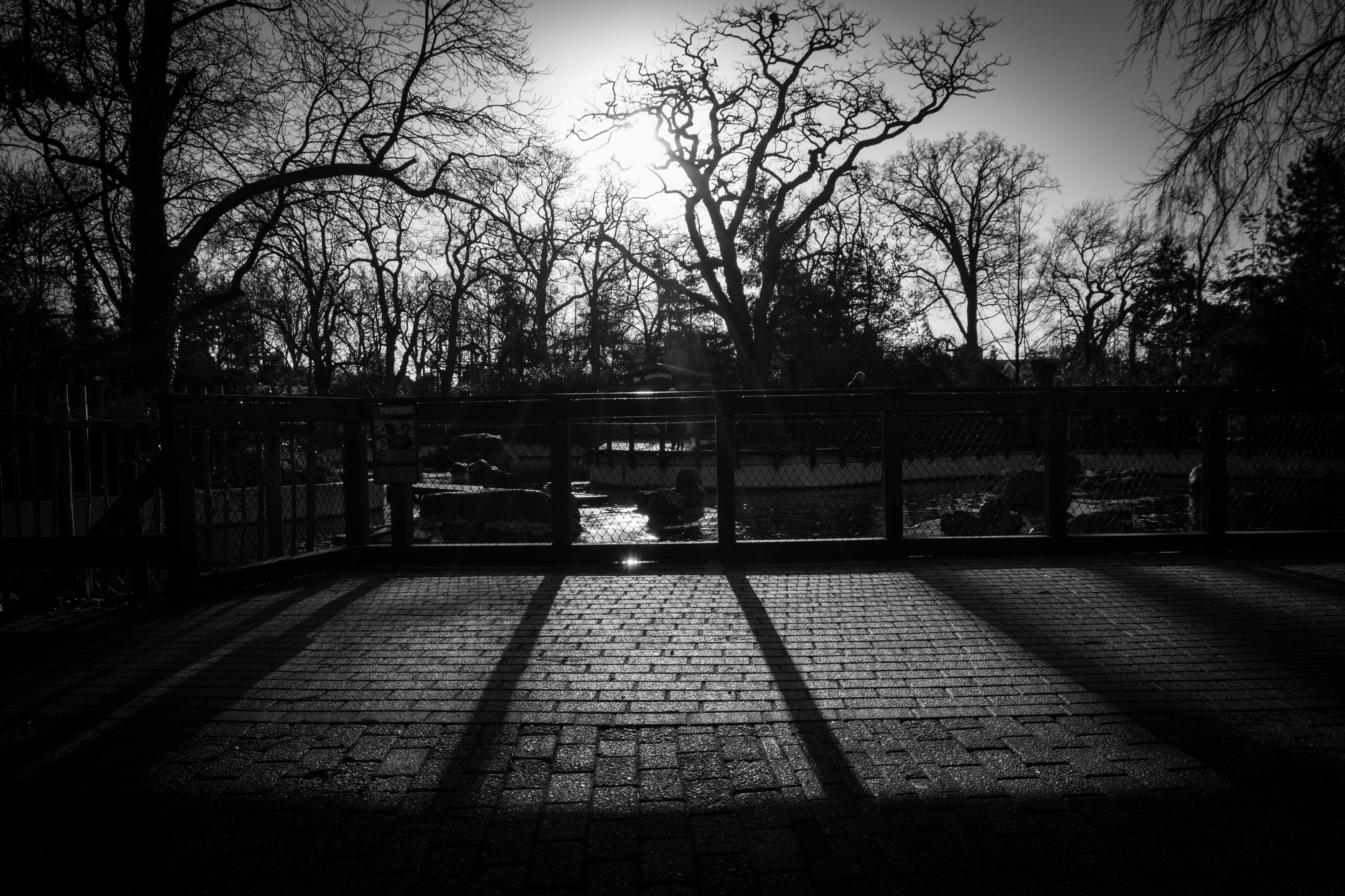 Бесплатное стоковое фото с деревья, солнечный, тени, черно-белый